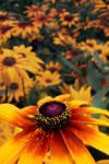 Poder das Flores by SergioCatarino