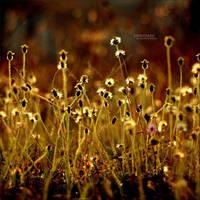 golden scrub by lemperayam