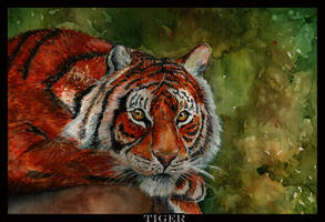 tiger... by Kermit-91
