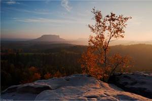 Autumn birch by Aphantopus