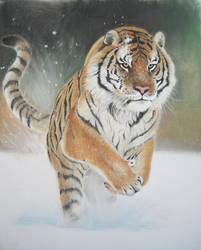 Siberian Tiger by AmaniWarrington