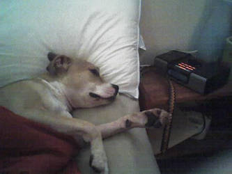 It's a dog's life by Kira-neko