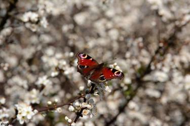 Messenger of Spring by SilentGuardian35