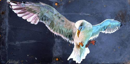 Seagull II by scumbellina