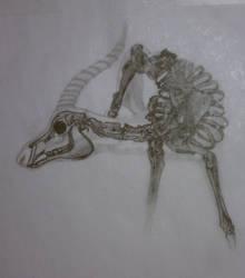 Antelope Skeleton by STRUDELL