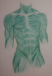 Male Muscular Anatomy by STRUDELL