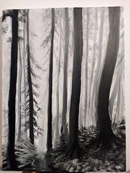 BW forest study by RobynRose