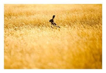 Fields Of Gold by GVA