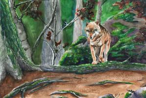 Autumn Wolf by Frabulator