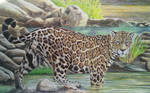 Jaguar by Leogon