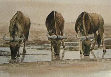 Wildebeests by Leogon