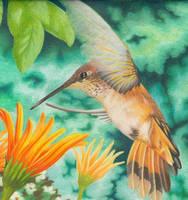 Color Humming Bird by visque01