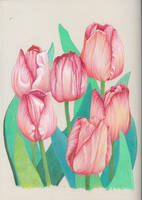 Pink Tulips by visque01