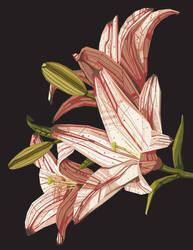 Flowers by Nataliya13