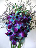 Beautiful Orchids by gayatri23119