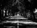 Tree Road by Torkhelle