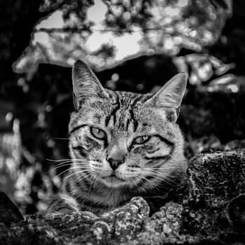 Grumpy by Torkhelle