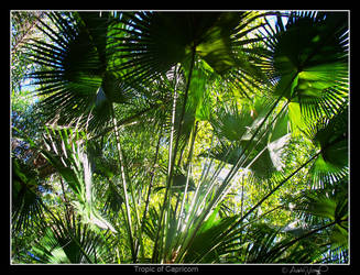 Tropic of Capricorn by WingedEnigma