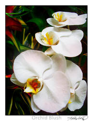 Orchid Blush by WingedEnigma