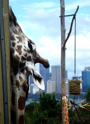 Giraffe View by le-liups
