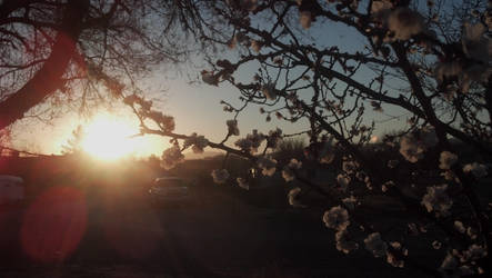 February Blossoms II by missrelena