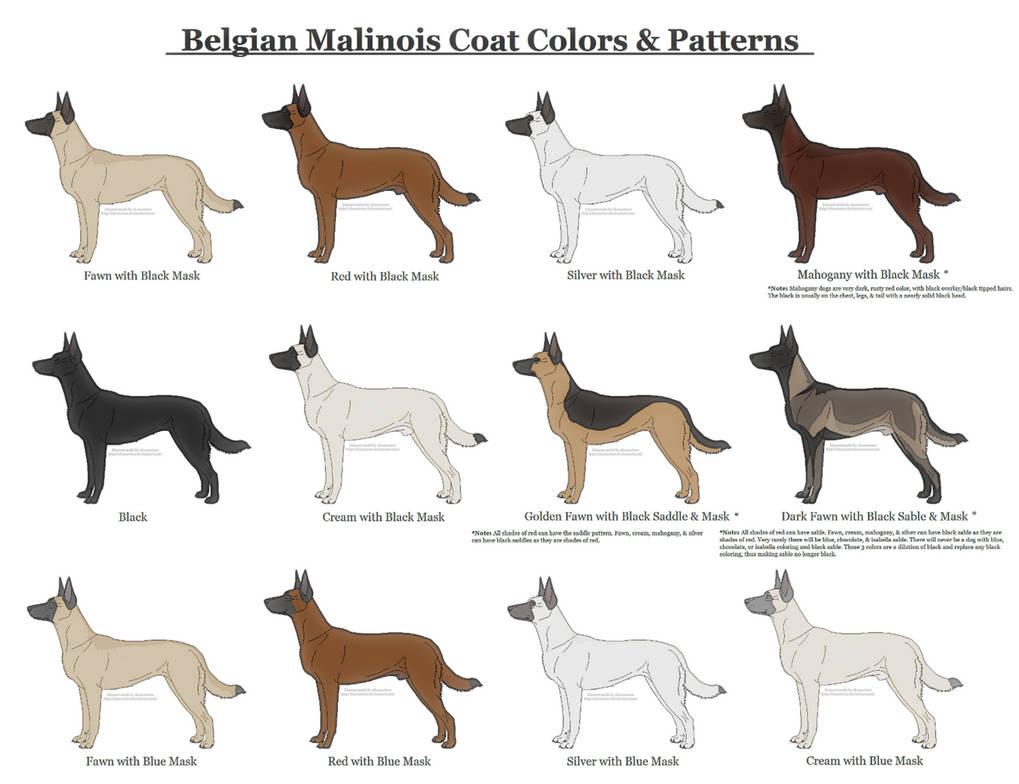 Do Greyhounds Make Good Guard Dogs