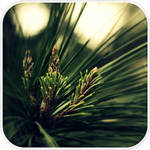 Polygon Pine needles by Sunira