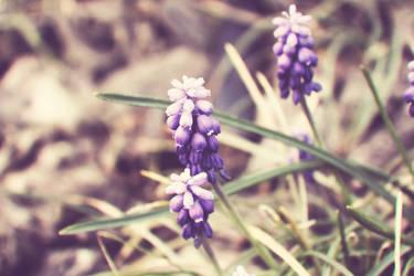 Lovely Purple by Sunira