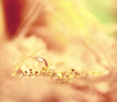 Touch of Gold by photonerd16