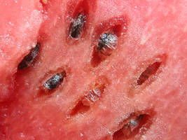 watermelon macro 01 by tiffgraphic