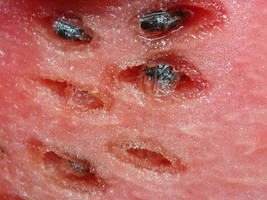 watermelon macro 02 by tiffgraphic