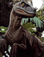 Velociraptor by Arkanthor