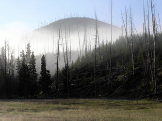 Yellowstone morning by rwgp