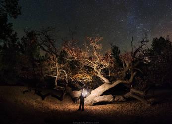 Great oak in the night by Sergey-Ryzhkov