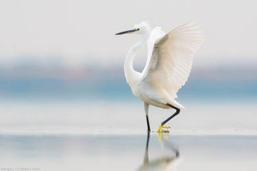 Little Egret by Sergey-Ryzhkov