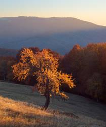Autumn in Carpathians by Sergey-Ryzhkov