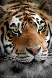Up close and fierce by TlCphotography730