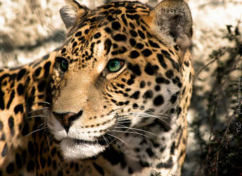 Spotted and lovely by TlCphotography730