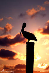 Pelican silhouette by TlCphotography730