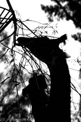 Giraffe silhouette by TlCphotography730