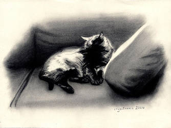 Sunlit Fur by crysothemis