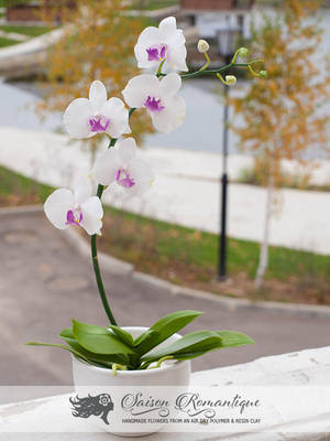 Phalaenopsis Orchid - Polymer Clay Flowers by SaisonRomantique
