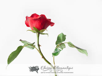 Red Rose - Polymer Clay Flowers - Part 2 by SaisonRomantique