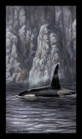 The Wall - Killer Whale by jaxxblackfox