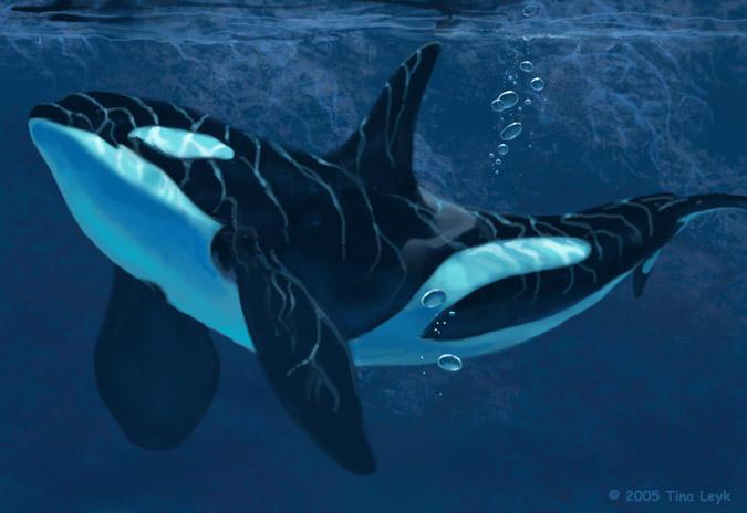 Orca Reflections. by jaxxblackfox