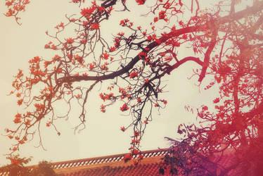 hoa gao by bibi97nd