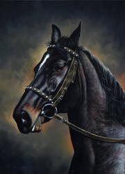 Horse portrait by Fel-X