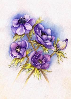 Anemone by Leona-Norten