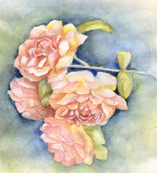 Roses by Leona-Norten