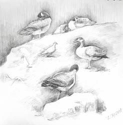 Birds by Leona-Norten